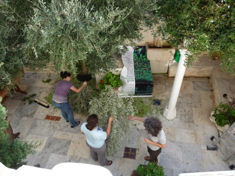 aegean-center-olive-tree
