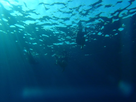 aegean-center-underwater-2