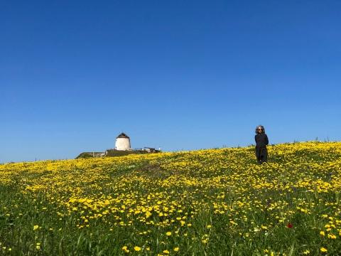 Spring Flowers & Jane '19.jpg